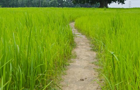 India farm-Kansabel, Chhattisgarh