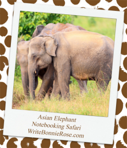 Asian elephant safari notebooking page