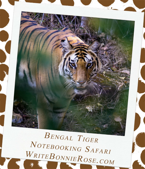 Notebooking Safari-India and the Bengal Tiger Part One