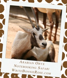 Notebooking Safari-Oman and the Arabian Oryx