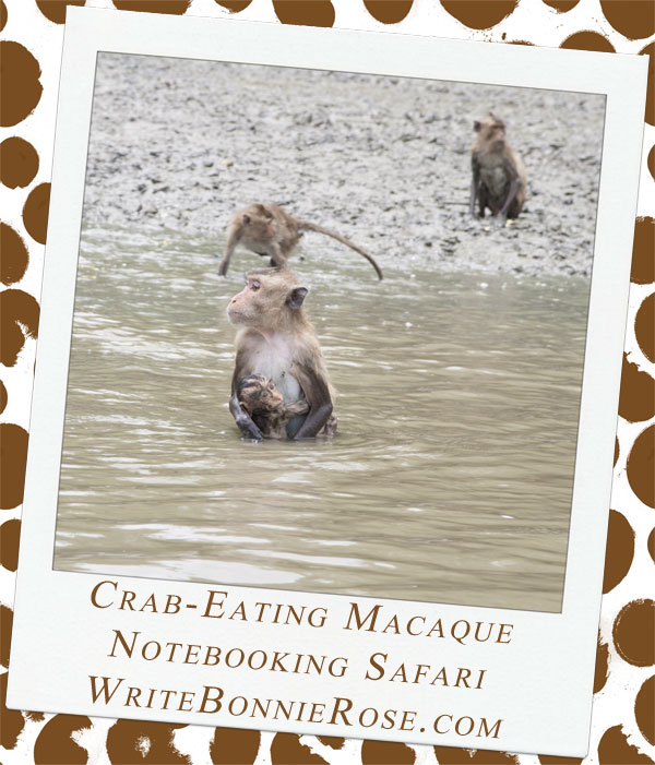 Notebooking Safari-Singapore and the Crab-Eating Macaque