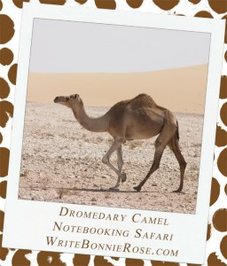 Notebooking Safari-United Arab Emirates and the Dromedary Camel