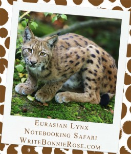 Eurasian Lynx and Iraq Notebooking Safari