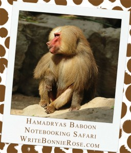 Notebooking Safari-Yemen and the Hamadryas Baboon