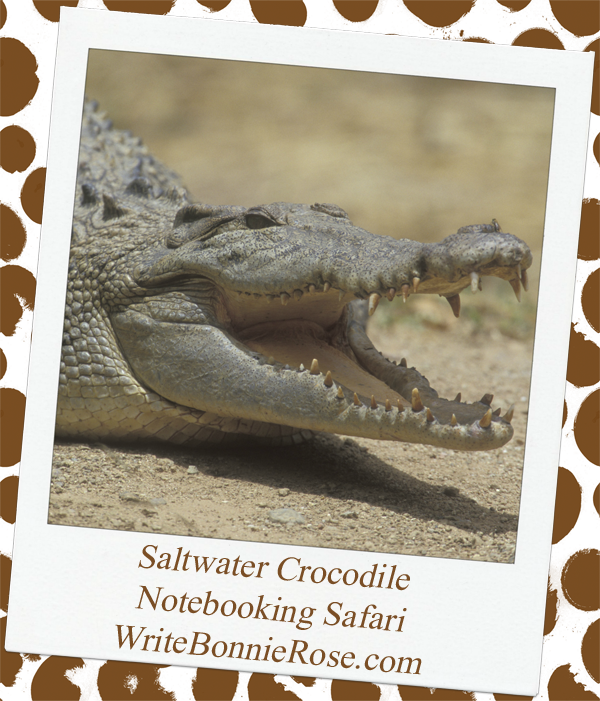 Notebooking Safari Burma and the Saltwater Crocodile