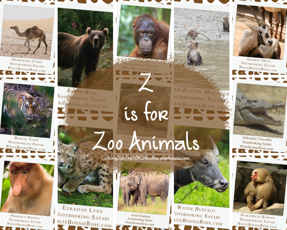 Z is for Zoo Animals