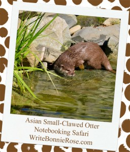Notebooking Safari-Bangladesh and the Asian Small-Clawed Otter