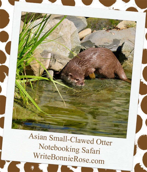 Bangladesh and the Asian Small-Clawed Otter Notebooking Page Safari