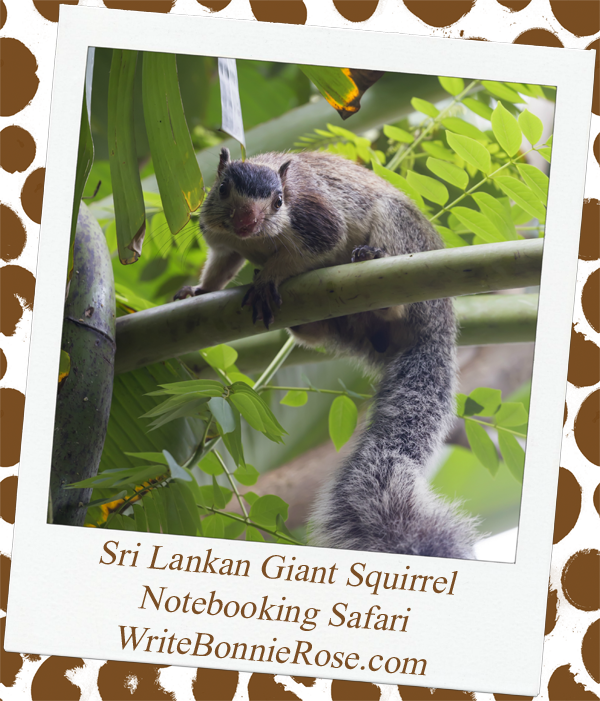 Notebooking Safari Sri Lanka and the Giant Squirrel