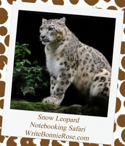 Notebooking Safari -Kazakhstan and the Snow Leopard