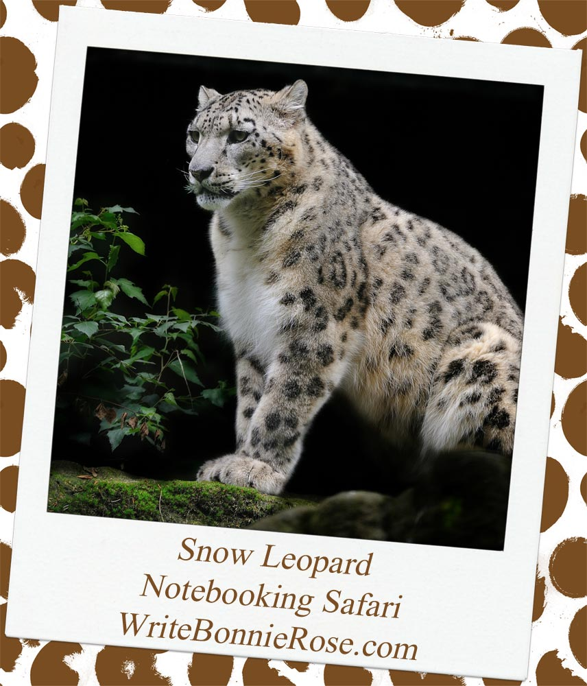 Notebooking Safari-Kazakhstan and the Snow Leopard