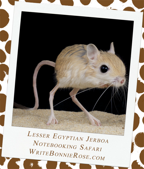 Lesser Egyptian Jerboa Safari Notebooking Page
