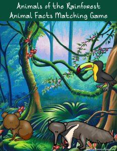 Animals-of-the-Rainforest