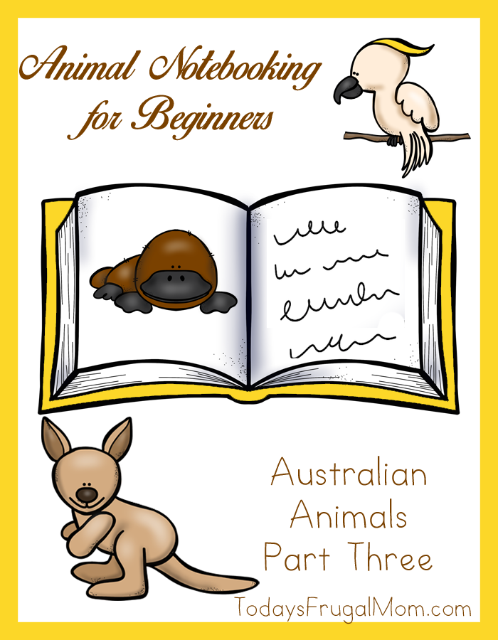 Animal Notebooking for Beginners, Australian Animals Part Three