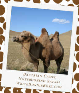 Notebooking Safari-China and the Bactrian Camel