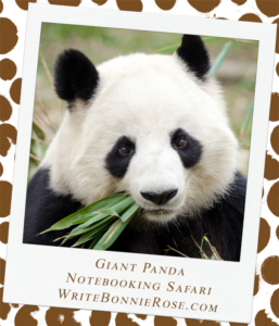 Notebooking Safari-China and the Giant Panda