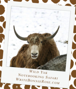 Notebooking Safari-India and the Wild Yak