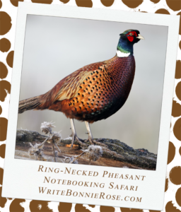 Notebooking Safari-Iran and the Ring-Necked Pheasant