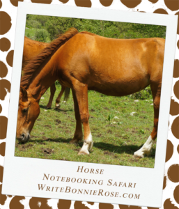 Notebooking Safari-Kyrgyzstan and the Horse