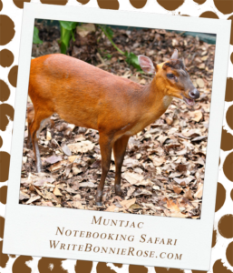Notebooking Safari-Pakistan and the Muntjac