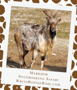 Notebooking Safari-Tajikistan and the Markhor