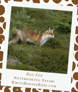 Notebooking Safari-Turkmenistan and the Red Fox