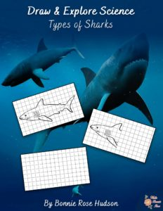 Draw-and-Explore-Types-of-Sharks